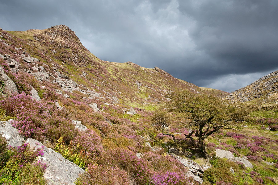 Tavy Cleave tree under a stormy sky