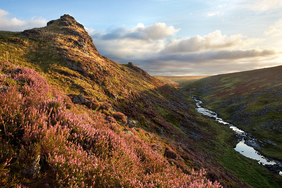 Sharp Tor heather t sunrise