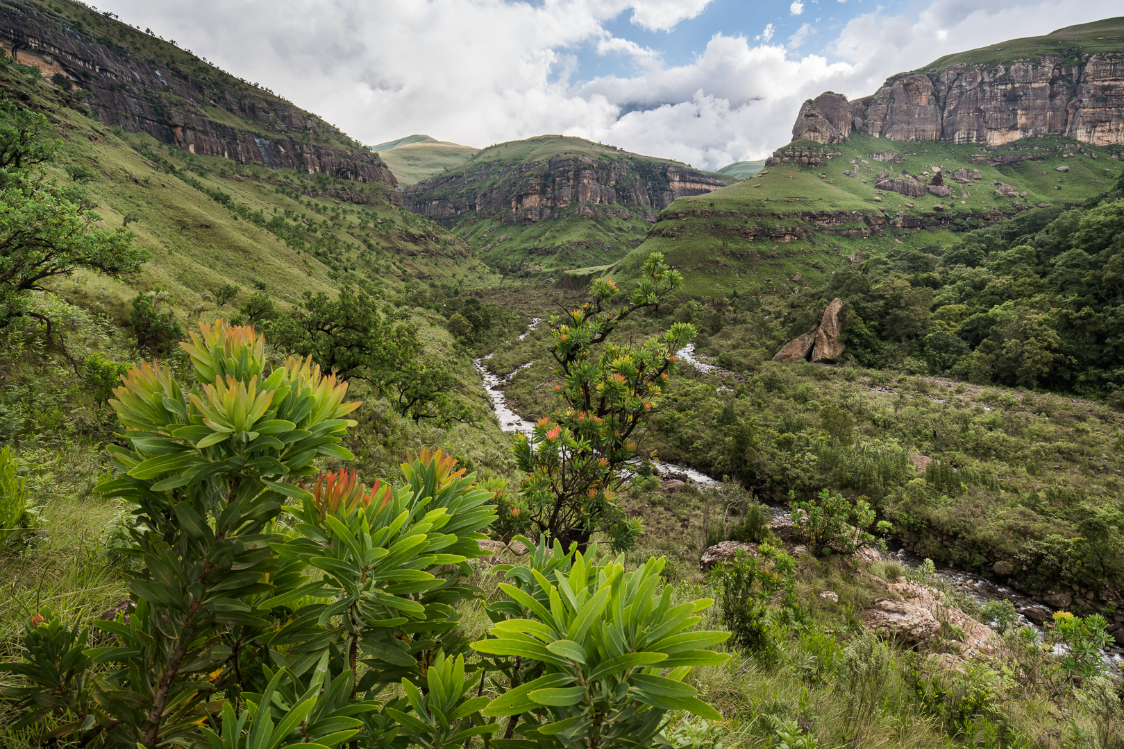 Protea trees line the valleys and there are numerous stands of untouched woodland