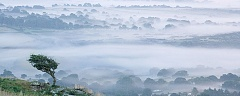 hawthorn tree view over Devon in the mist