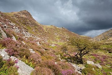 heather at Tavy Cleave with a stormy sky overhead