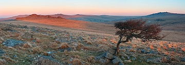 Hawthorn tree at sunrise with light hitting the peaks of tors