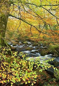Photo of fantastic autumn foliage on the river walkham