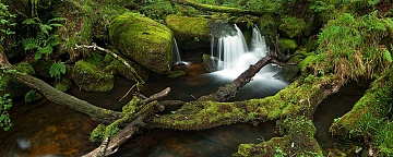 small waterfalls on a stream in devon with mossy branches