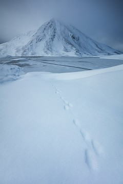 Mountain hare tracks at Loch Eilde Mor
