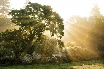oak tree with sunlight bursting through